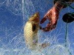 Женщина-рыбак избила двоих мужчин рыбой