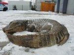 В польском лесу обнаружен задушенный крокодил
