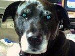 Пса представили к награде за спасение своего хозяина