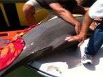 Дельфин решил отдохнуть на лодке с туристами