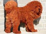 Очередной пес бьет рекорды по своей стоимости