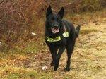 Не лайте на полицейских псов