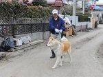 В Японии спасли дрейфовавшего на доме пса