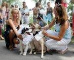 Собачья свадьба обошлась в 30 тысяч долларов