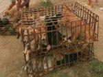 Китайские защитники животных спасли сотни собак