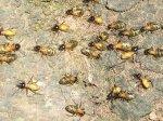 Термиты съели десять миллионов рупий в индийском банке