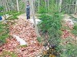Тонна колбасы найдена в эстонском лесу