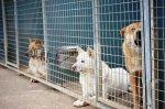 Бродячие собаки стали преградой распространению крыс
