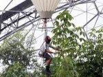 Инструментом английского садовника стал воздушный шар