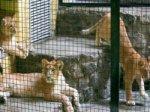 Британская организация требует закрыть киевский зоопарк