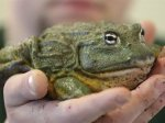 В Германии рассмотрели дело об убийстве лягушки