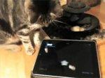 Friskies создали игру на iPad для кошек