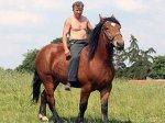 К возлюбленной на лошади