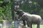 Сбежавшие из цирка слоны решили подождать автобус