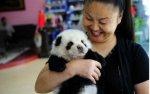 Это не панда, и не тигр, а всего лишь собака