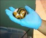 Бразилец спрятал змей и черепах в трусах