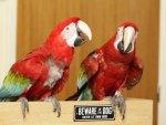 Лающие попугаи прогнали грабителей