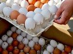 Два жителя Алтайского края арестованы за кражу яиц
