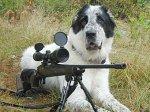 Собака подстрелила своего хозяина