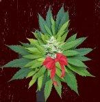 Контрабандисты спрятали наркотики в рождественских подарках