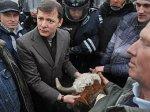 Депутату пришлось убирать за своей коровой