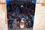 Американка хранила дома 450 птиц