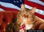 Кот хочет стать членом сената США