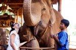 Новый кофе из экскрементов слона – только в Таиланде