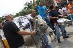 Эквадорцы хотели поставить на должность осла
