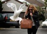 В Англии чайки мешают почтальонам работать