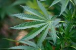 Женщина хотела узнать у полиции о безопасном хранении наркотиков