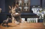 Пивная компания открыла бар с официантами-собаками